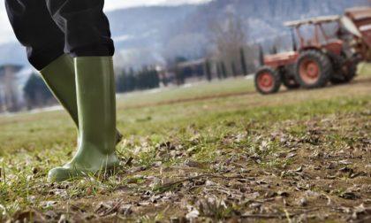 Il consumo di suolo agricolo nella Bergamasca