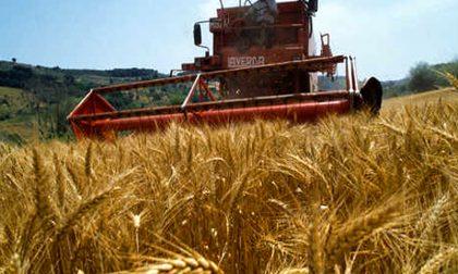 Agroalimentare bergamasco in crescita, ma preoccupa l'aumento dei costi di produzione