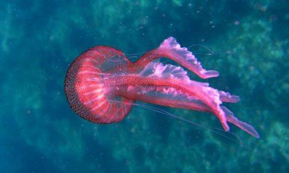 Dopo la famosa invasione delle meduse a Filicudi