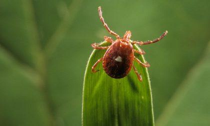 USA, scoperto l'insetto che fa diventare vegetariani