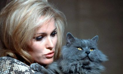 Ritratti di star a quattro zampe Tutti i gatti di Hollywood