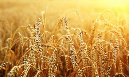 Agricoltura, exploit di assunzioni Ecco i dati nella bergamasca
