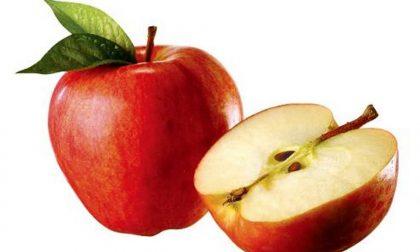 Le due polemiche sulle mele