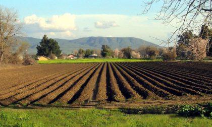 I passi per diventare agricoltore Ci vuole chiarezza e pazienza
