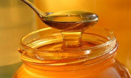 Aveva ragione la nonna Il miele ha proprietà antibiotiche