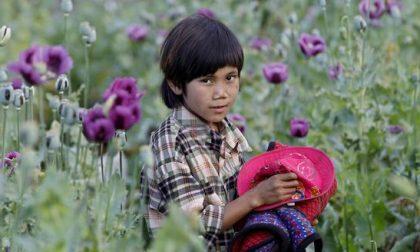 Fallita la campagna Usa anti-oppio Per l'Afghanistan record di sempre