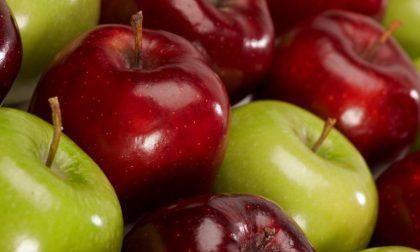Tutto sulle mele della Val Brembana