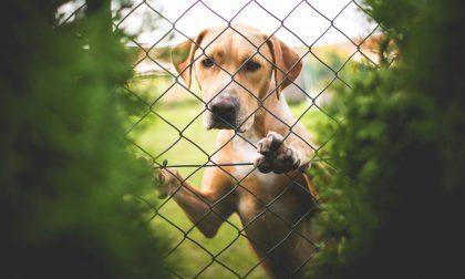 Amanti degli animali, tranquilli I maltrattamenti sono ancora puniti