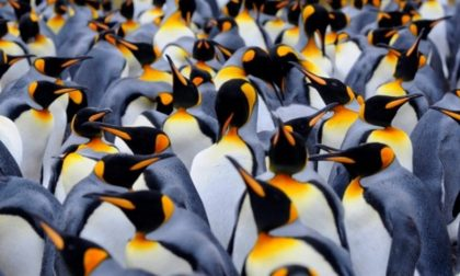 I pinguini non hanno gusto (E non parliamo di senso estetico)