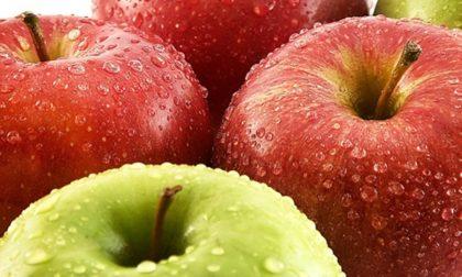 Sorpresa, una mela al giorno toglie il…dietologo di torno