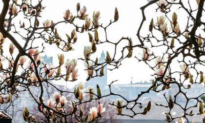 La primavera a Bergamo in 50 foto