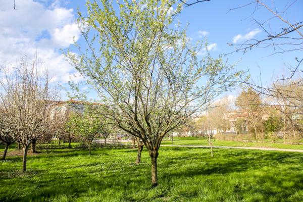 primavera a bergamo foto devid rotasperti (3)