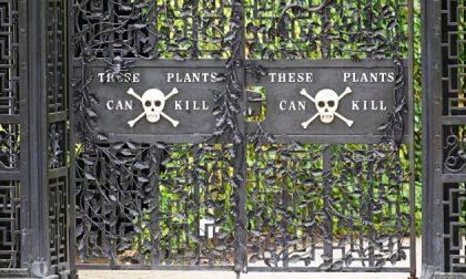 Il giardino più velenoso del mondo (ops, si sono dimenticati l'oleandro)
