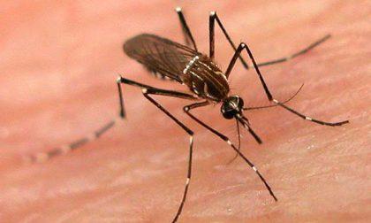 Come attaccano le (infami) zanzare e perché preferiscono voi a un altro