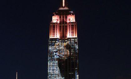 E anche l'Empire State Building s'illumina per Cecil (e tutti gli altri)