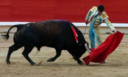 Podemos ha vietato le corride (che sono Patrimonio Culturale)