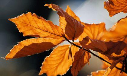 Il primo giorno d'autunno