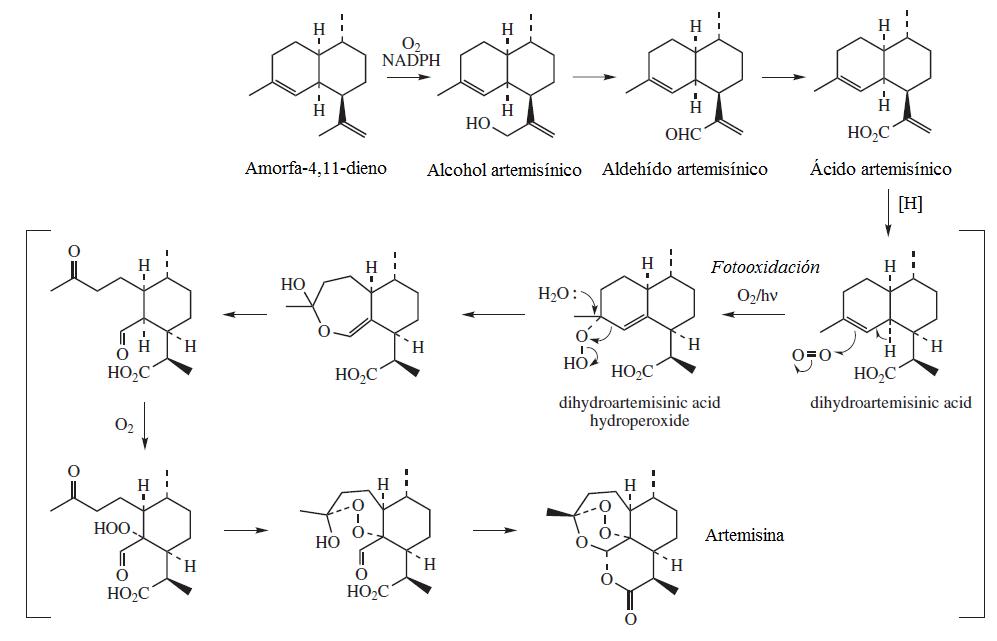Biosíntesis_de_la_artemisina