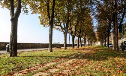 Le mura d'autunno – D. Rotasperti