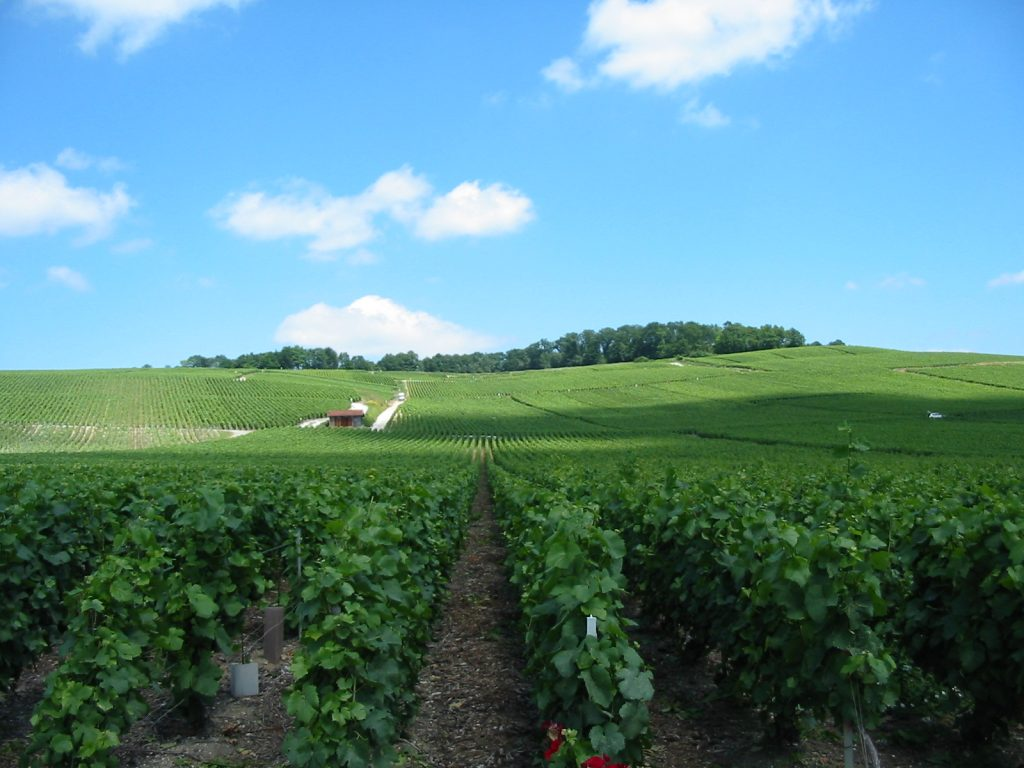 Vineyards_near_Epernay