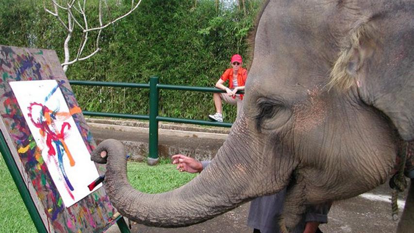 elephat-paints