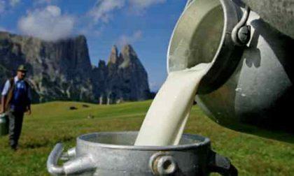 L'accordo sul prezzo del latte che non salverà le piccole fattorie