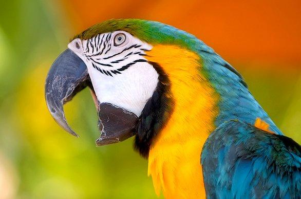 pappagallo_03