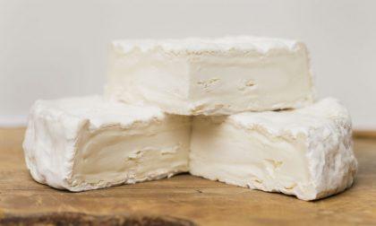 Un formaggio da oro mondiale L'arte del caseificio di Brignano