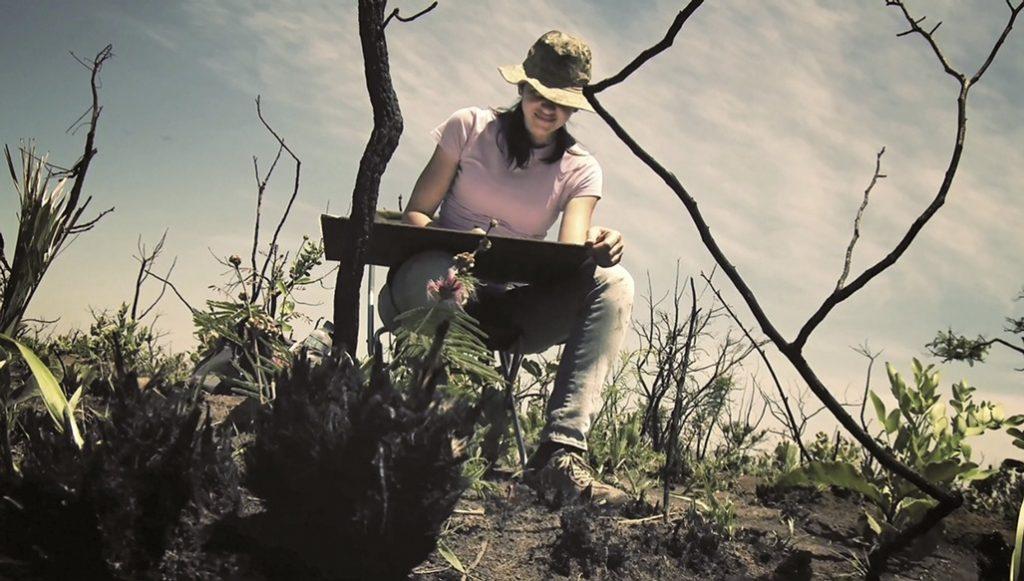 Parque das Emas-2011-fotogramma estratto da video