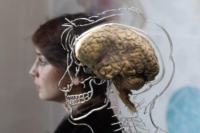 cervello-memoria-638x425