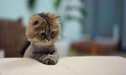 10 divertenti video di gattini per festeggiare la loro giornata