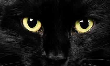 Superstizioni che non ci sono più Tipo il gatto nero porta sfortuna