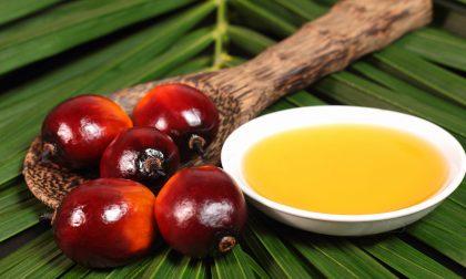L'olio di palma fa bene o fa male? Il ministero della salute dice nì