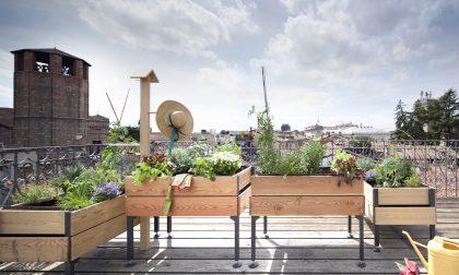 Consigli per l'orto sul balcone (marzo è proprio il periodo giusto)