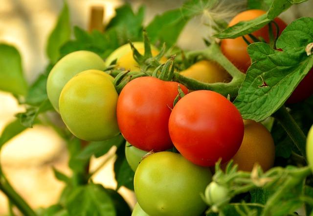 tomatoes-879441_640