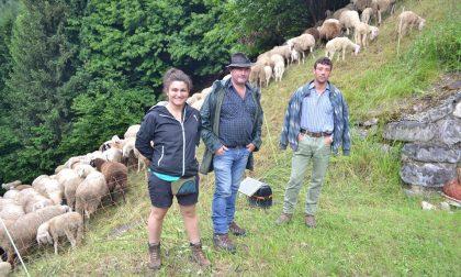 Pasturs, l'esperienza dei giovani al servizio dei pastori bergamaschi