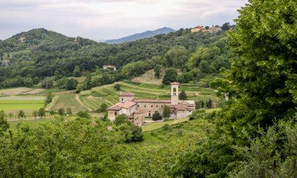I 10 alberi più belli di Bergamo