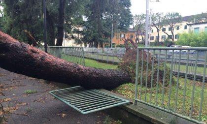 I danni della rissa tra temporali Dalmine e il caso grave di Longuelo
