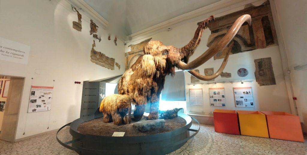 museo-caffi-scienze-naturali