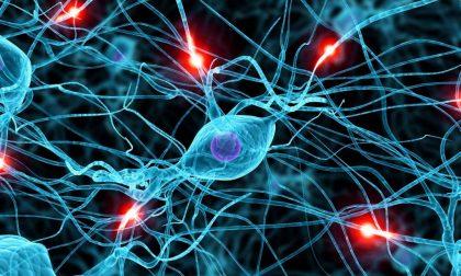Come nascono le nostre abitudini (una questione di circuiti cerebrali)
