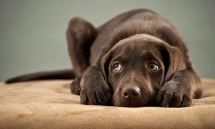 Ecco tutto quel che dovete fare se il vostro cane è un fifone