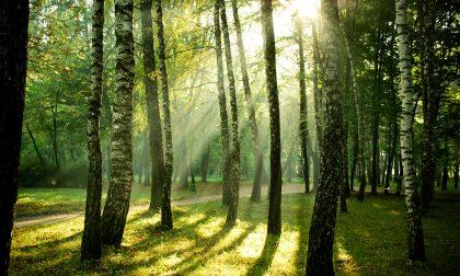 Che ne dite di investire in foreste? Ecco i fondi che proteggono il verde