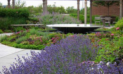 È primavera, nuovo look per 4 parchi Giardino degli abbracci al Triangolo