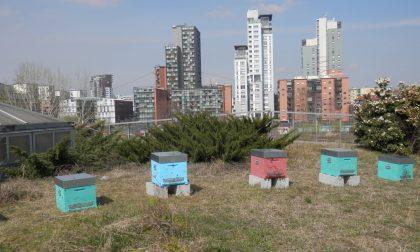 Alveari di api al centro Le Due Torri Custodi del rispetto dell'ambiente