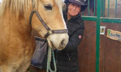 Oasi per cavalli anziani e malati Roberta li ha salvati dal macello