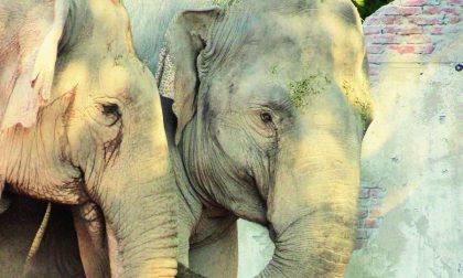 Elefanti indiani, un'oasi a Valbrembo Nuova area del parco Le Cornelle