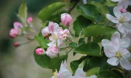 """Pasqua fiorita in Val Brembana È la primavera di """"Quelli delle Mele"""""""