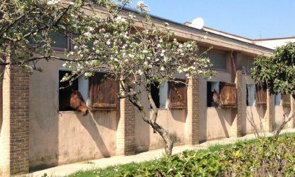 Previtali, se l'amore per i cavalli diventa maestria da addestratore