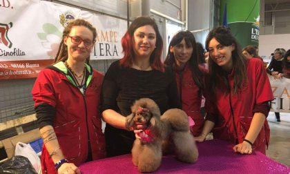 Irma, la hair stylist bergamasca che pettina i cani di tutta Italia