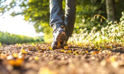 Farsi una passeggiata nel verde è un toccasana per il cervello